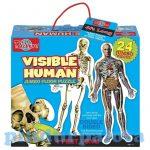 Puzzle - Egyszerű - T.S. Shure jumbo emberi test