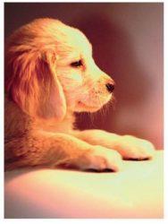 Írószerek - Iskolaszerek - Boxok - Gumis mappa Kutyával