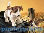 Kesztyű bábok - Plüss kesztyűbáb Jack Russel Terrier kutya
