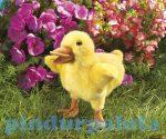 Kesztyű bábok - Plüss kesztyűbáb kacsa sárga