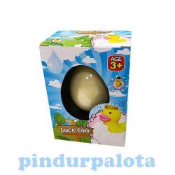 Tojásból kikelő állatok - Kikelő kacsa tojás