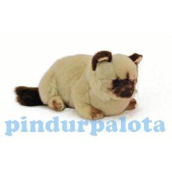 Plüss Cica - Ragdoll - Plüss állat